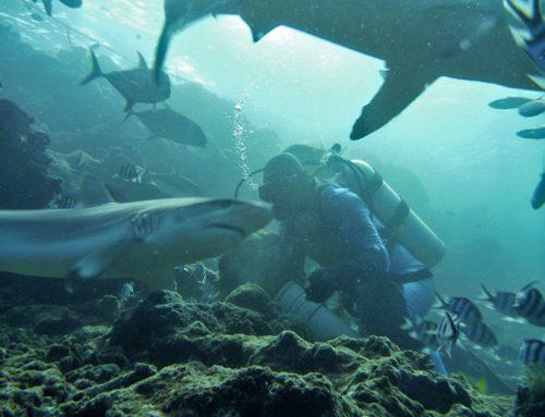 FIJI – potapljanje z morskimi psi