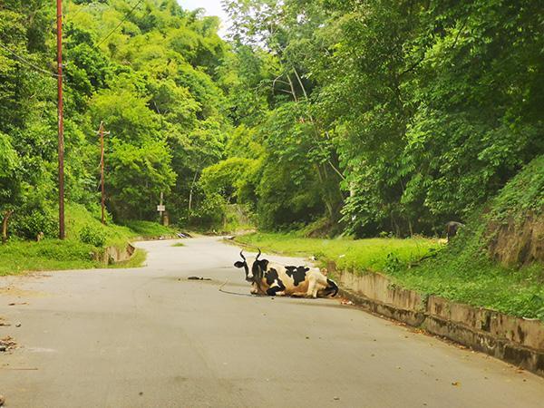 Ceste na Trinidadu in Tobagu