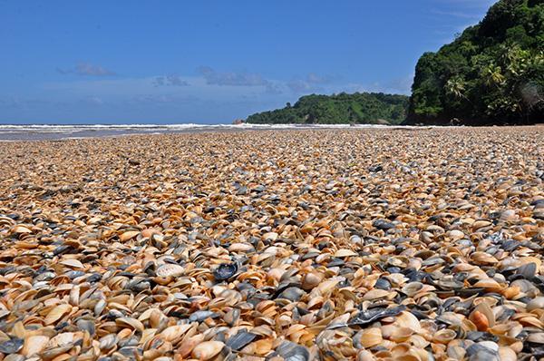 Plaža na Trinidadu, Mayaro