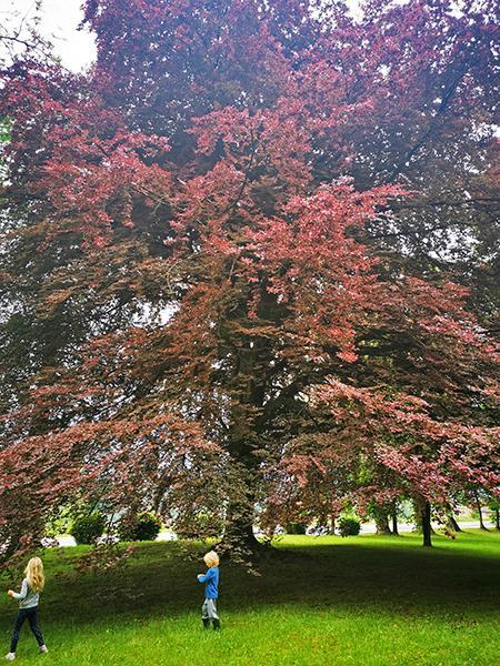 Grajski park ob dvorcu Viltuš