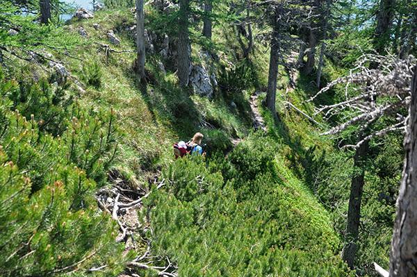 Pot skozi rušje tik pod vrhom Kamniškega dedca