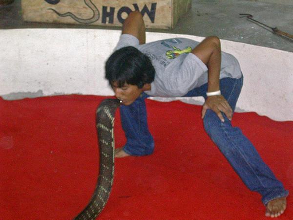 Predstavitev s kačami, Tajska