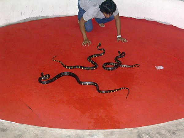 Predstavitev s kačami