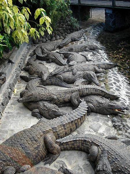 Park krokodilov