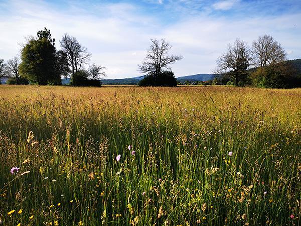 Cvetoči travniki ob Cerkniškem jezeru