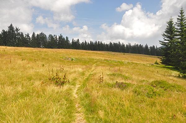 Mogočni travniki na Smrekovcu