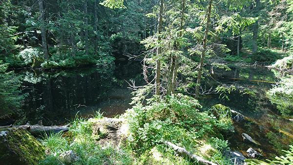 Črno jezero na Smrekovcu