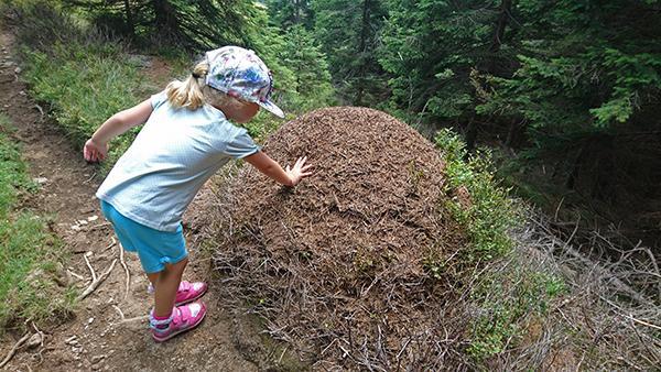 Mravljišče