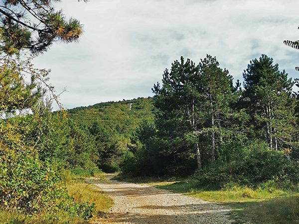Makadamska cesta na Kokoš