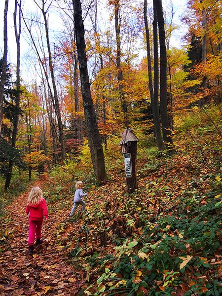 Zmajčkova gozdna učna pot