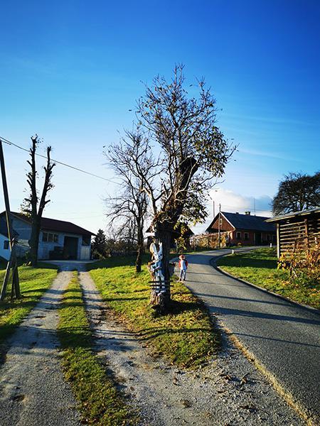 Ob tem drevesu skrenemo levo proti Petrovi dolini miru