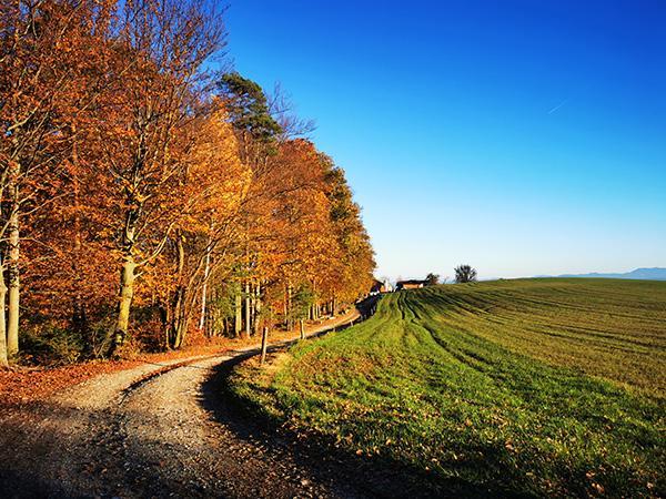 Pogled nazaj proti kmetiji Rebernak
