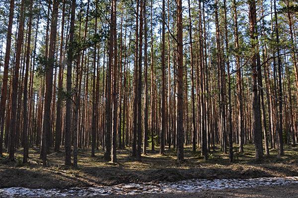 Gozd v Estoniji