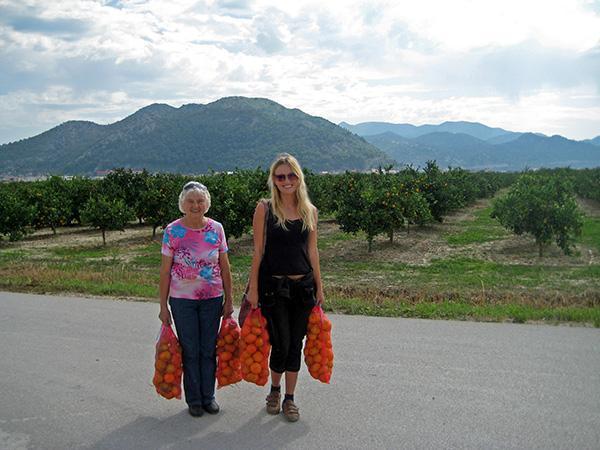 Dolina reke Neretve, nabiranje mandarin