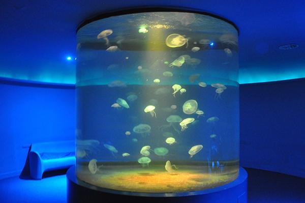 Akvarij v Palma de Mallorci