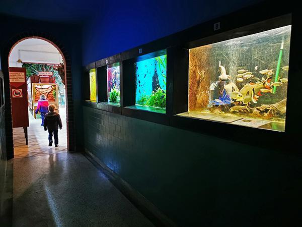 Akvarij - terarij Maribor
