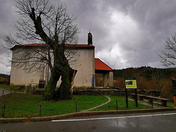 Lipa v centru vasi Predjama