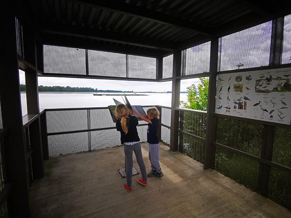 Opazovanje ptic na Ptujskem jezeru