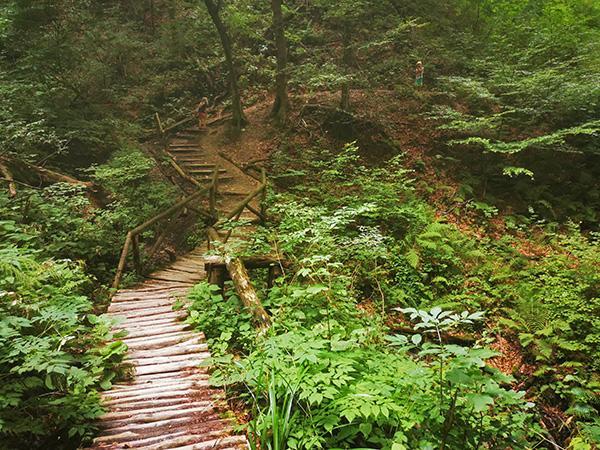 Označene poti po Mestnem gozdu Celje