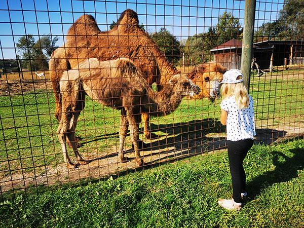 Živalski vrt Preding